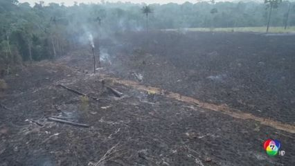 ป่าแอมะซอนเผชิญวิกฤตตัดไม้รุนแรงสุดในรอบทศวรรษ